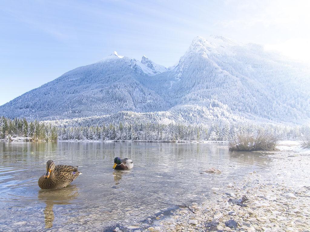 Urlaub am Hintersee - Wintertraum