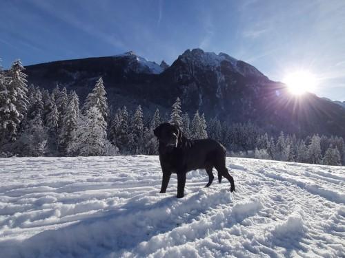 Urlaub mit Hund Berchtesgaden-Hintersee