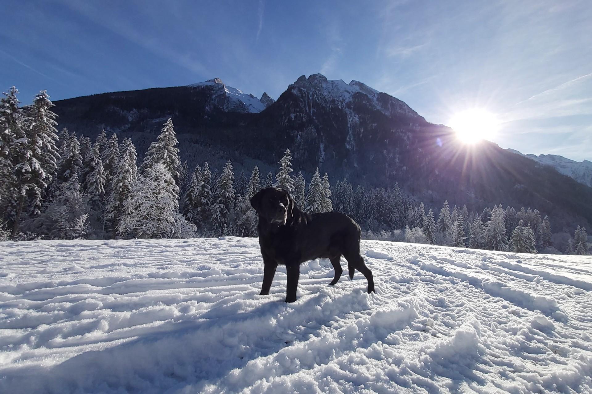 Urlaub mit Hund in Berchtesgaden am Hintersee